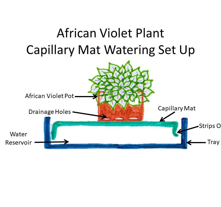 Capillary Mat Watering African Violet Plants : How To Use And Set Up